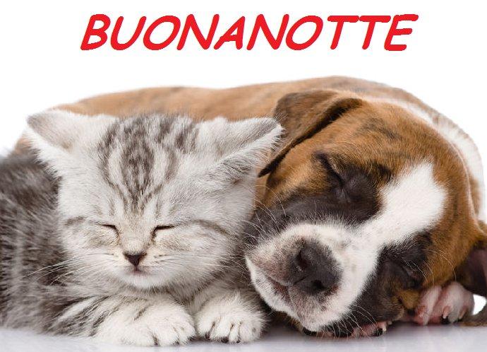 Buonanotte Amore Con Animali Gatto E Cane