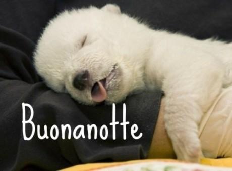 cagnolino,cucciolo,con,ligua,dorme,beato
