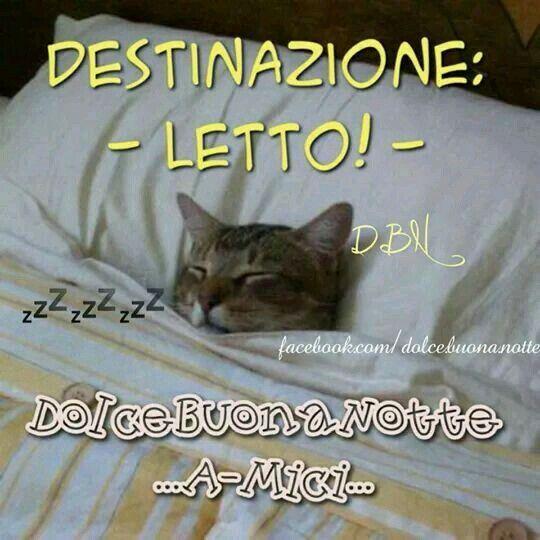 Preferenza Buonanotte divertente gatto AZ37