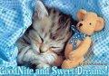 buonanotte-animata-animali-gatto-orsacchiotto