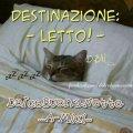 immagine-buonanotte-divertente-gatto-destinazione-letto