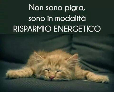 Buonanotte Divertentissima Gattino